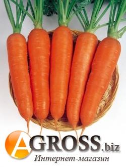 Семена моркови Виктория F1 500 г - фото 3717