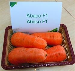 Семена моркови Абако F1  калибр 1,8-2,0 (200 000 шт) - фото 6814