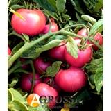 Семена томат Пинк Свитнес F1 500 шт