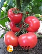 Семена томата KS 14 F1 100 шт