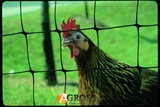 Сетка вольерная для птиц 2м утолщенная