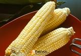 Семена кукурузы Солодка Мрия F1 (ВегеF1) 1000 шт