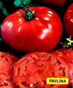 Семена томата Павлина  5 г