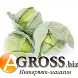 Семена капусты Корсума F1 (калибр.) 1000 шт