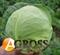 Семена капусты Оракл F1 2500 шт - фото 3697