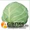Семена капусты Акира F1 1000 шт - фото 3701