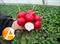Семена редиса Диего F1 250 г - фото 3944