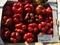 Семена перца Геркулес F1 5 г - фото 6649