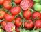 Семена томата Мармара F1 1000 шт - фото 8165