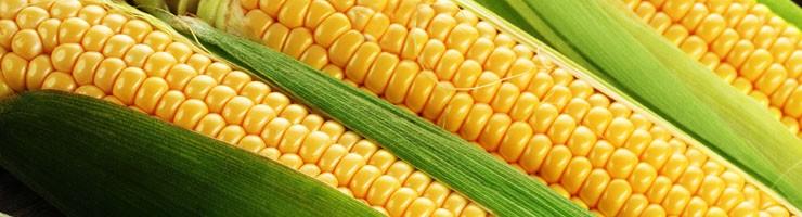 Семена кукурузы сахарной