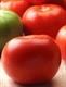 Семена томата красного (низкорослого)
