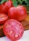 Семена томата розового (низкорослого)