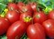 Семена томата - сливка