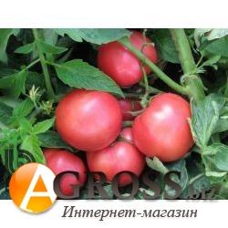 Семена томата Торбей F1 - фото 3610