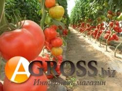 Семена томата Аксиома F1  - фото 3614