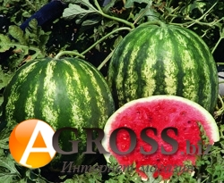Семена арбуза Трофи F1 1000 шт - фото 3666