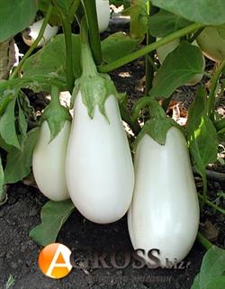 Семена баклажана Бибо F1 (белый) - фото 3966
