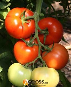 Семена томата Берберана F1 500 шт - фото 4028