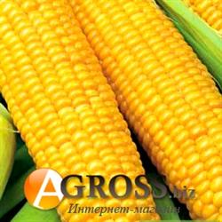 Семена суперсладкой кукурузы  Мегатон F1 4000 шт - фото 5661