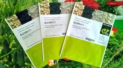 Семена огурца Бйорн F1 - фото 5883