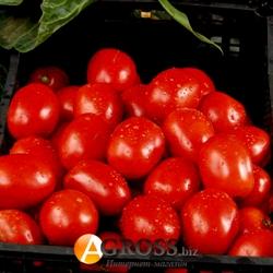 Семена томата Рио Гранде 10 г - фото 5934
