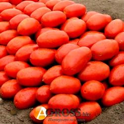 Семена томата Инкас F1 - фото 5938