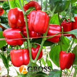 Семена перца Ред Джет F1  100 шт - фото 5956
