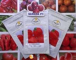 Семена томата Шаста F1 - фото 5985