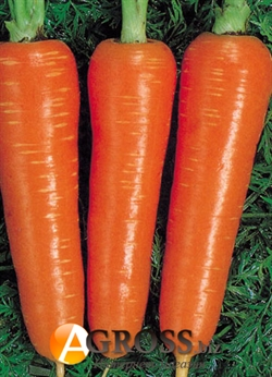 Семена моркови Курода (Ларк Сидз) - фото 5992