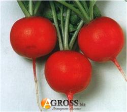 Семена редиса Красный Гигант 250 г - фото 6108