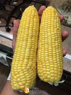 Семена кукурузы Багратион (Чемпион) F1 - фото 6221