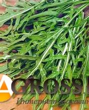 Семена руколы Вайлд Рокет (Hortus) - фото 6275