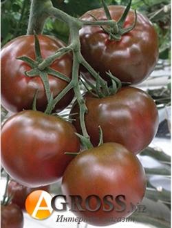 Семена томата Сашер F1 - фото 6287