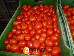 Семена томата Яки F1 1000 шт - фото 6334