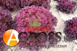 Семена салата Николай 10 000 шт - фото 6336