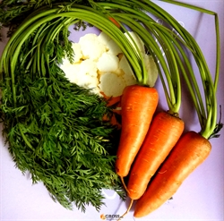 Семена моркови Боливар F1 (кал.1,6 - 2,0) - фото 6485