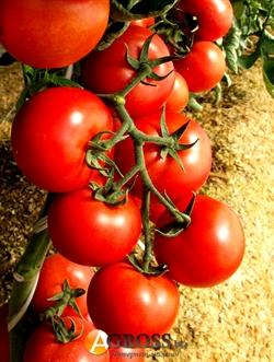 Семена томата Зульфия (73-610) RZ F1  - фото 6657