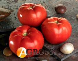 Семена томата Линда F1 1000 шт - фото 6714