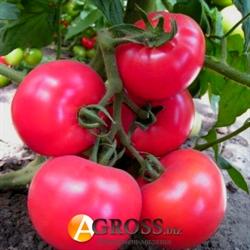 Семена томата Малинка Стар F1 - фото 6754