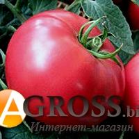 Семена томата Пандароза F1 500 шт - фото 6757