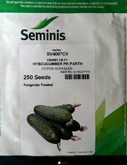 Семена огурца SV4097CV F1 - фото 6885