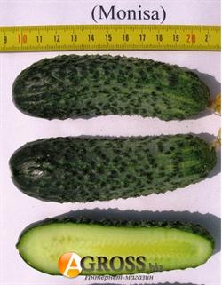 Семена огурца Монисия F1 - фото 6939