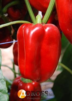 Семена перца Даймос F1 500 шт - фото 7135