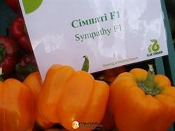 Семена перца Симпати F1 100 шт - фото 7187