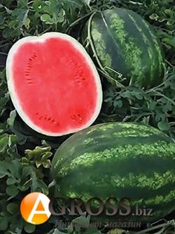 Семена арбуза Тамерлан F1 1000 шт - фото 7507