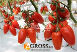 Семена томата Айдар F1 - фото 7585