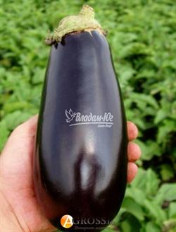 Семена баклажана Классик  F1  5 г - фото 7593