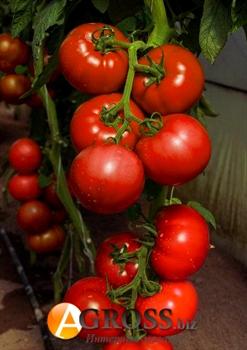 Семена томата Васанта F1 100 шт - фото 7625