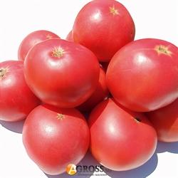 Семена томата Альма F1 (EZ 2104 F1) - фото 7708