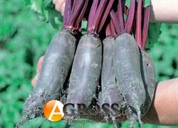 Семена свеклы Таунус  F1 (кал.3,0-3,5) - фото 7730
